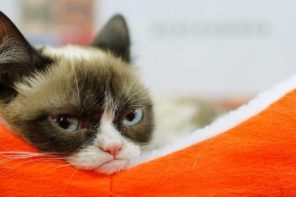 Grumpy Cat, the face that launched thousand memes, dead at seven